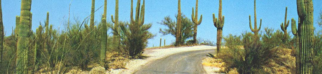 I Viaggi Del Cactus